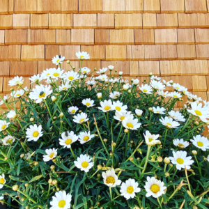 freistil. Magareten Blumenstrauß.
