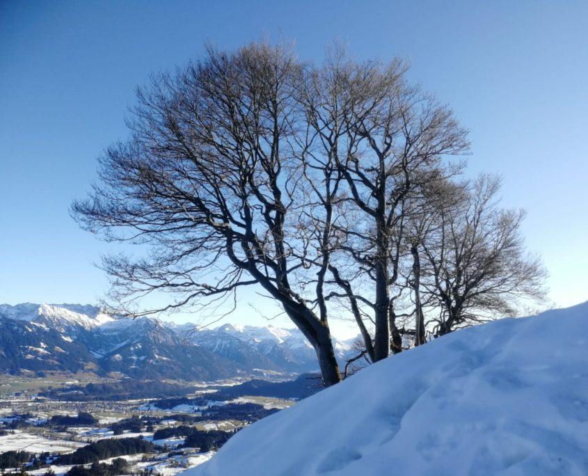 Panoramablick Richtung Oberstdorf. Ofterschwanger Horn Gipfel im Winter.