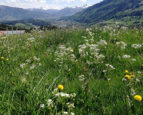 freistil. Oberallgäu. Sommer. Aussicht Richtung Oberstdorfer Berge über dem großen Alpsee.