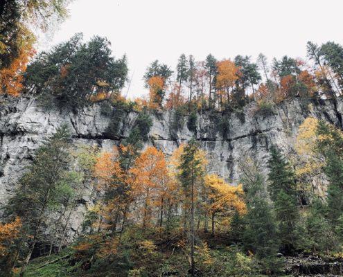freistil. Oberallgäu. Herbstwald Naturaufnahme in der Breitachklamm