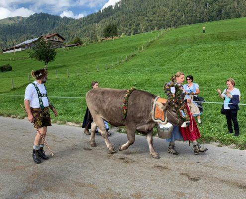 freistil. Oberallgäu. Kultur. Viehscheid Gunzesried mit geschmückter Kuh und Nagelfuhkette im Hintergrund