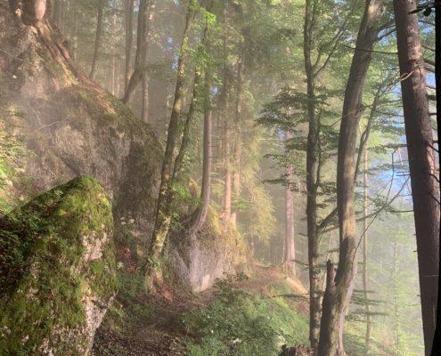 freistil. Oberallgäu. Panoramaweg im Wald oberhalb von Immenstadt